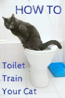 Tips in Potty Training Your Cat