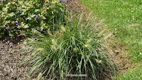 Grass in Friendship garden - Boothe Memorial Park and Museum, Stratford, CT