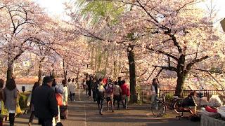 Suasana Musim Semi di Ueno Park