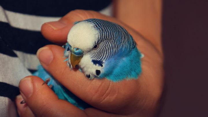 how to treat a sick bird