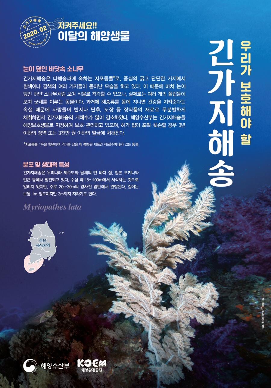 해수부, 2020년 2월의 해양생물 '긴가지해송' 선정