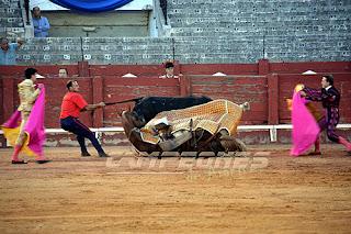 Toro derribo picador caballo Aranjuez