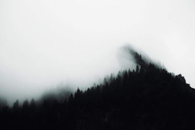 A dark pine forest wreathed in mist
