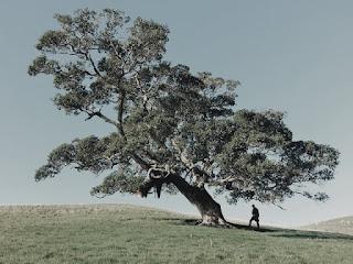 hijau pohon