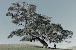Aku Bukan Pohon
