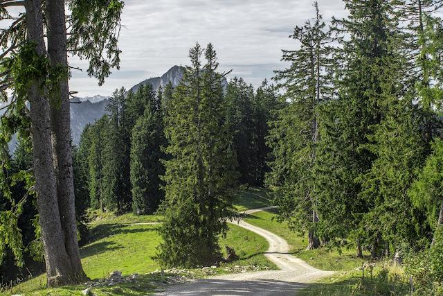 Unternberg Gipfeltour  Wandern Ruhpolding  Wanderung Chiemgau  Unternberg-Branderalm-Seehaus 01