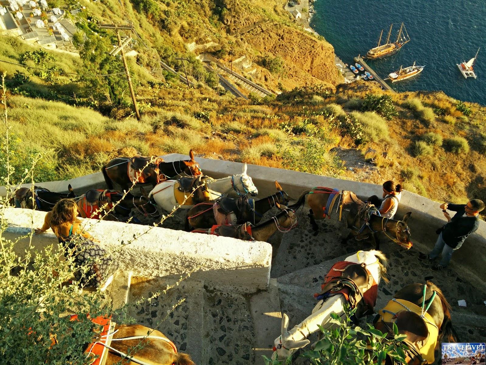Grèce Santorin Santorini âne