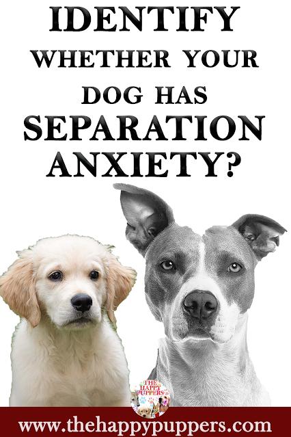 Identify whether your dog has separation anxiety