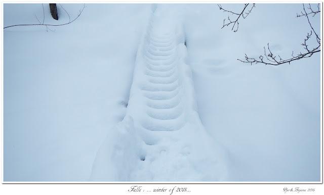 Fells: ... winter of 2015...