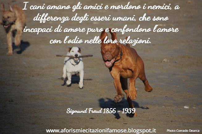 Frasi Sui Cani Pitbull.Aforismi E Citazioni Famose Aforisma Famoso Sigmund Freud
