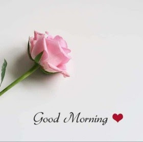 Latest Good Morning Images With Flowers