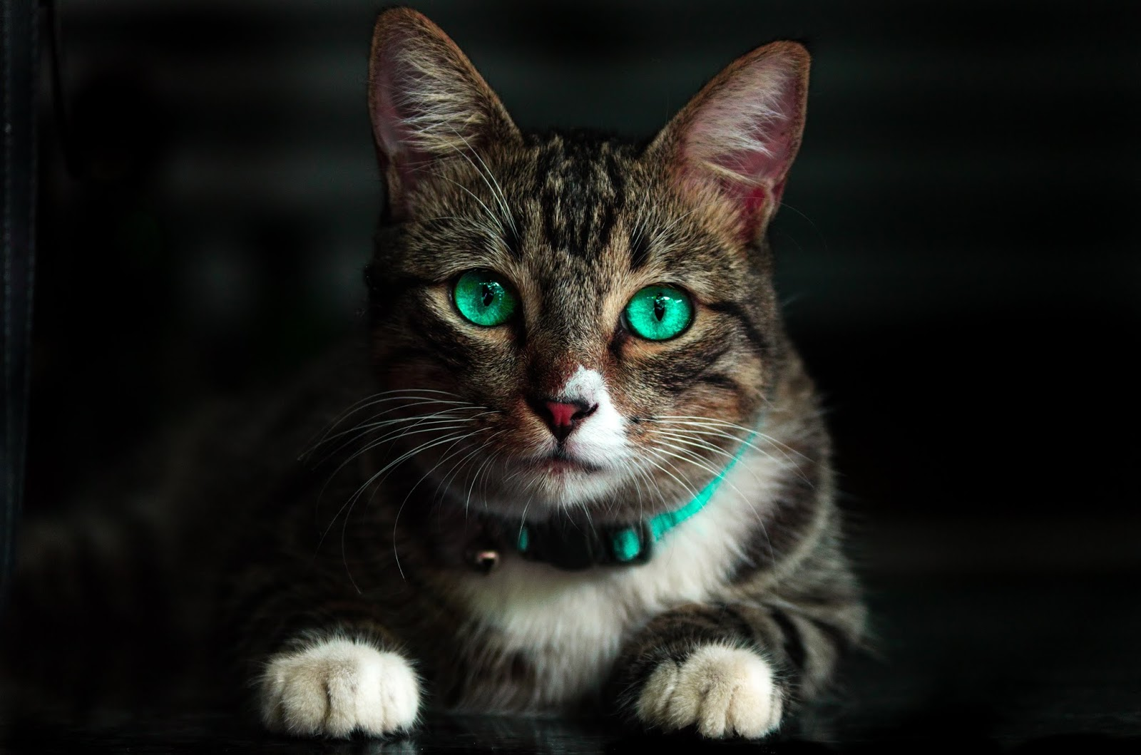 Brown cat with green eyes,cat images