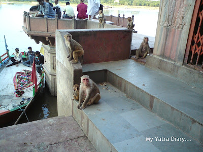 Monkeys at the Devotees taking a dip at the Yamuna River Ghat, Mathura
