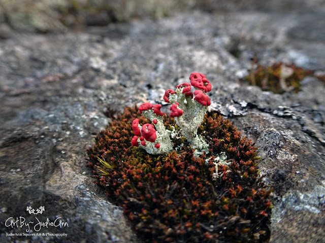 Colorful lichen and moss