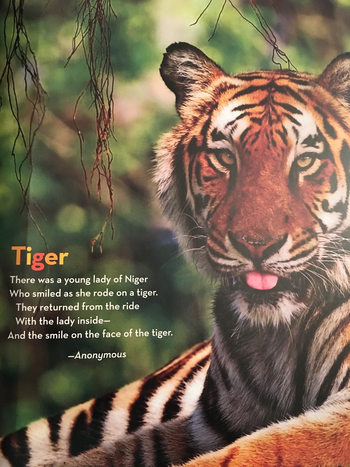 The tyger poem review and analysis | Term paper Writing
