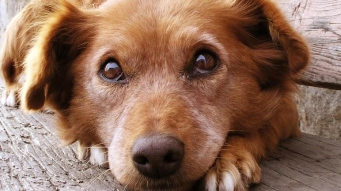 Κρήτη: Χειροπέδες και πρόστιμο 30.000 ευρώ σε άντρα που πυροβόλησε και σκότωσε σκύλο