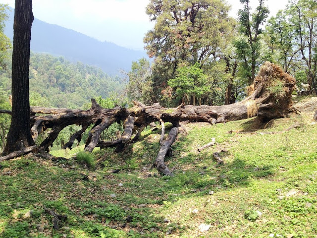 Munsiyari - The Gem of Uttarakhand, munsiyari weather