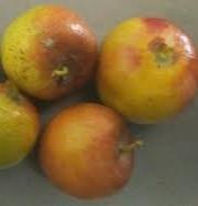 plum in dream, plum dream meaning