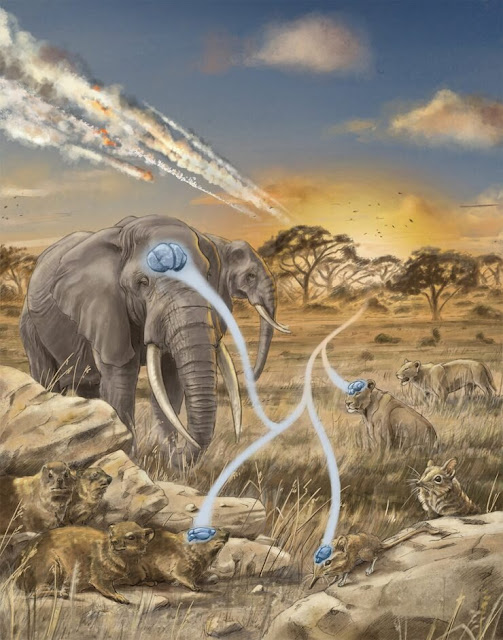 Mammals evolved big brains after big disasters