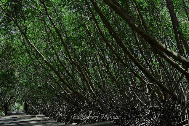 Hutan Mangrove Taman Hutan Raya Ngurah Rai Bali
