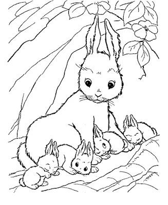 Gambar sketsa kelinci lucu sederhana dan mudah untuk diwarnai bagi anak-anak usia TK maupun SD