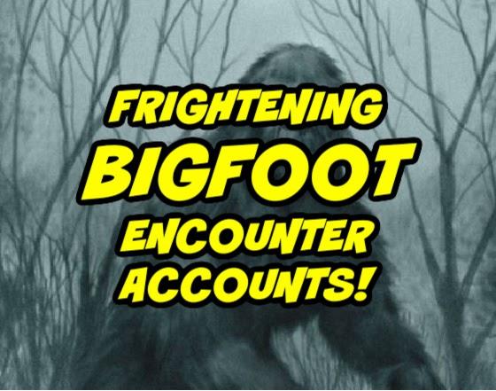 Frightening Bigfoot Encounter Accounts!