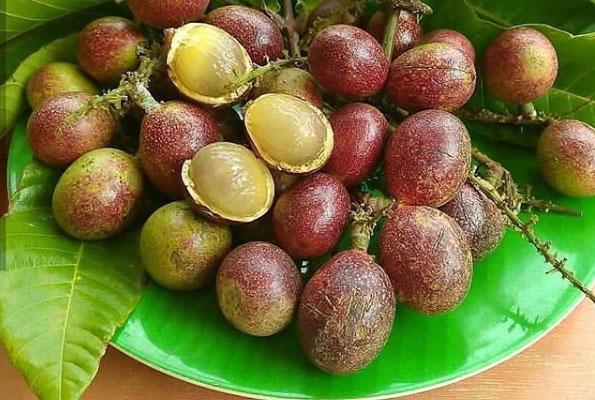 harga buah matoa