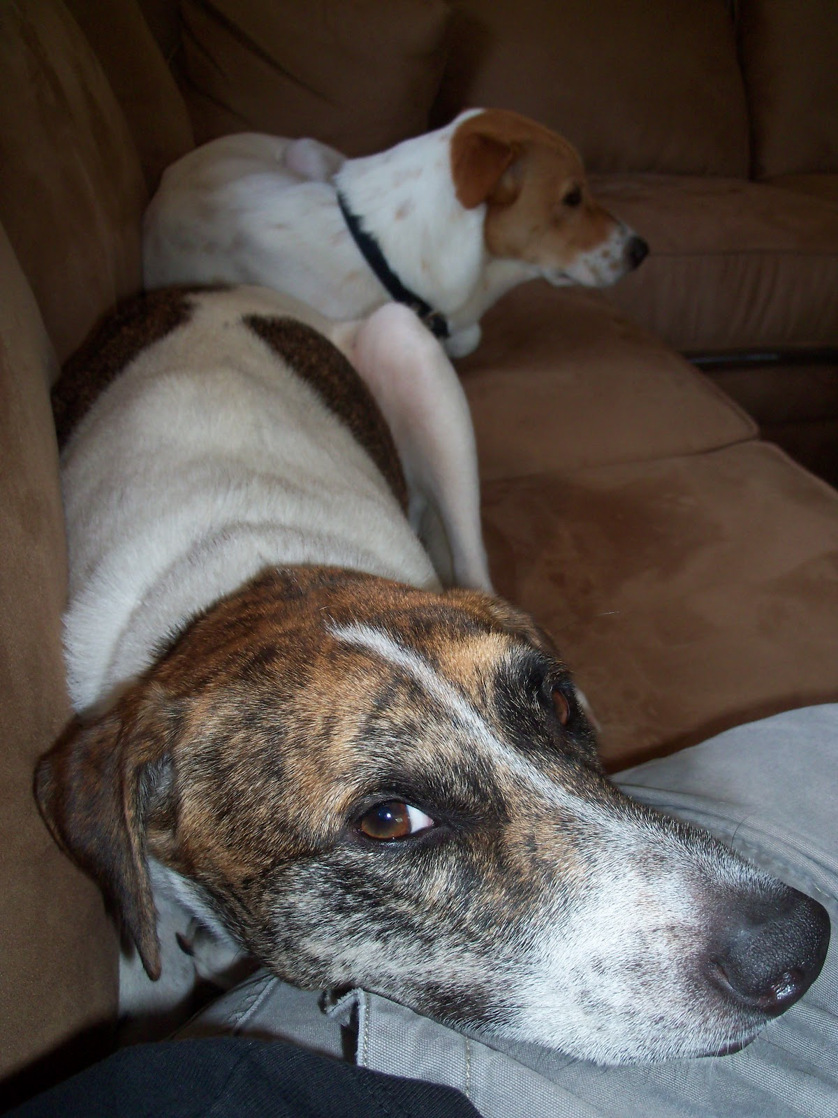 2 Punk Dogs: March 2012