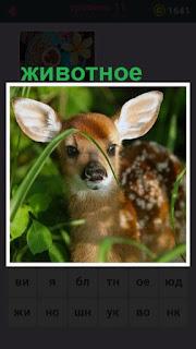 в траве стоит небольшое животное, маленький олененок
