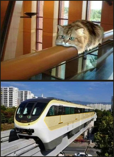 Monorail cat and Monorail train
