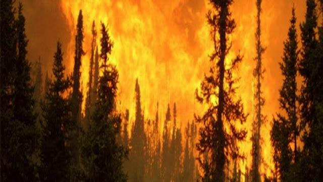 نابل : حريق غابة البندق تضرّر 100 هكتار على الأقل