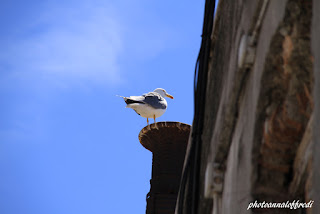 Seagull looking,photo