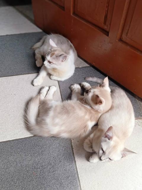 trio puss oktober 2020