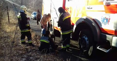 Bajba jutott kutyát mentettek a tűzoltók a Bélkőn