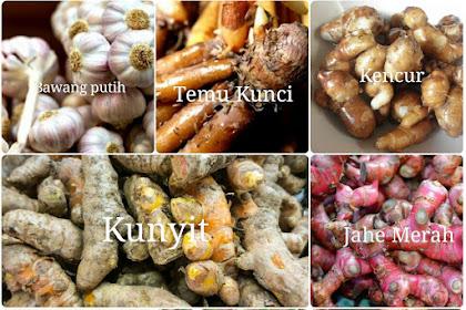 8 Ramuan Tanaman Bagus Untuk Ayam Bangkok