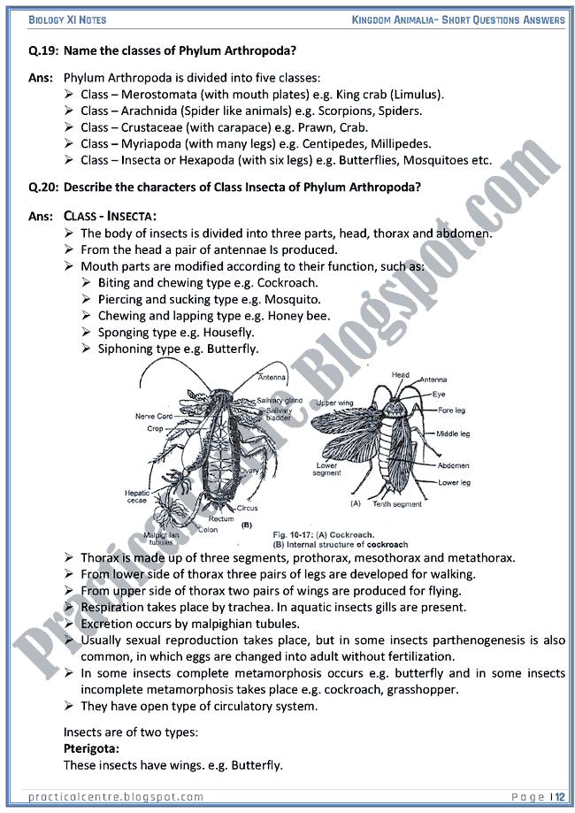 Kingdom Animalia - Short Questions Answers - Biology XI