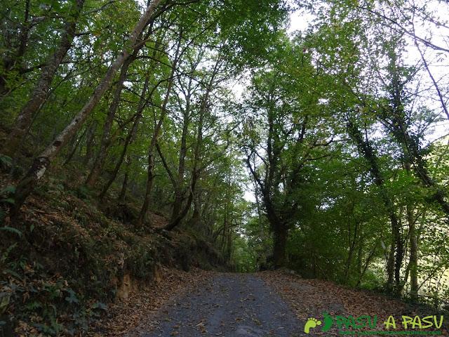 Ruta Pomar de las Montañas: Bosque