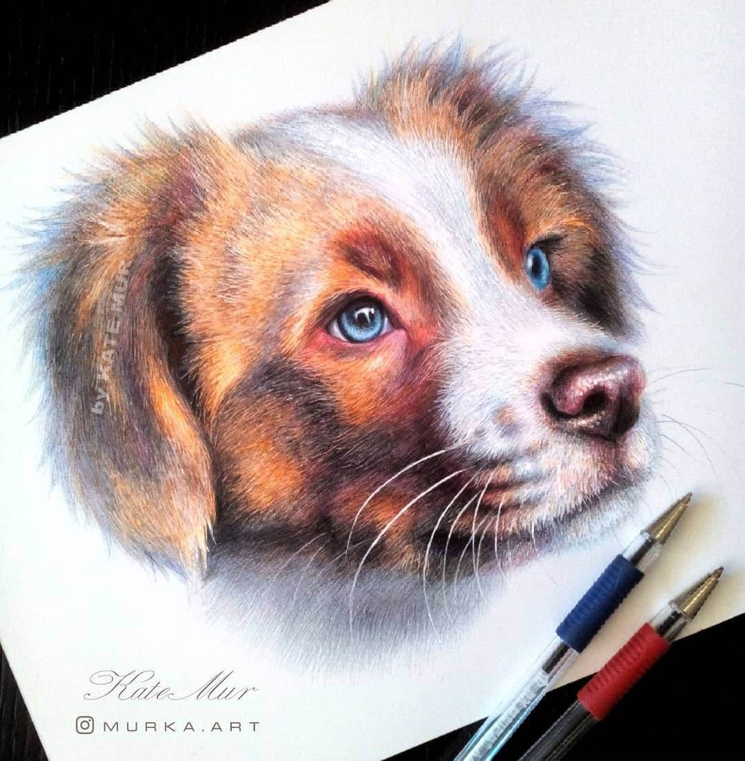 13-Sweet-Dog-Kate-Mur-Animal-Art-with-Pencil-Ballpoint-Pen-and-Paint-www-designstack-co