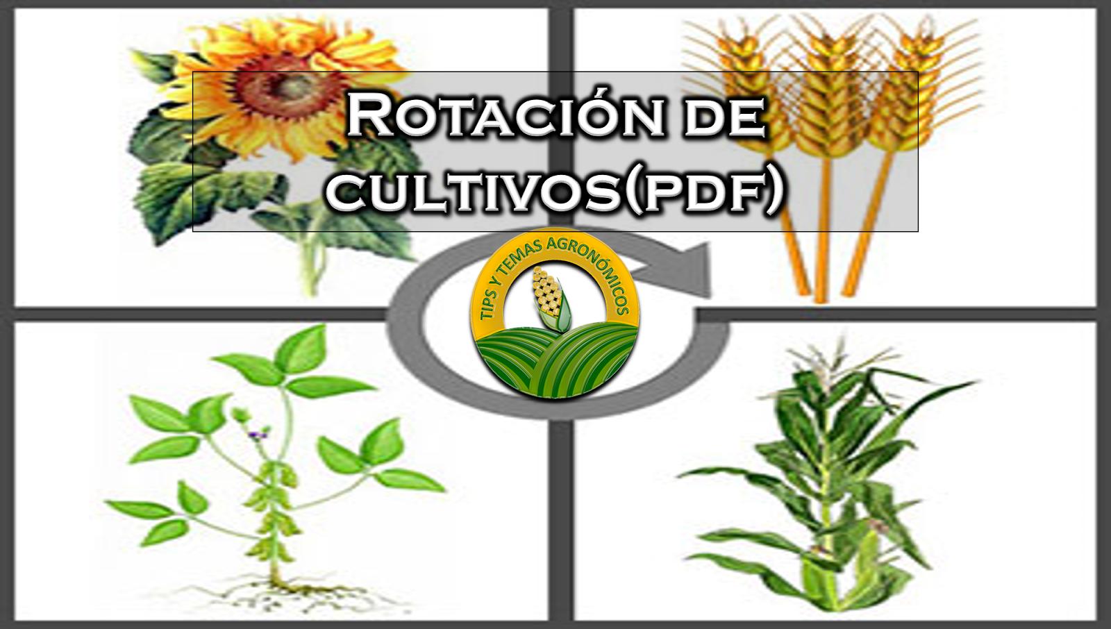 progresos en la producción de tuberculos-semillas de - Dialnet