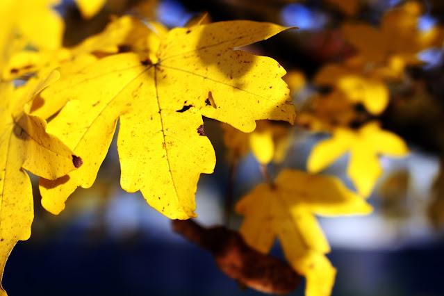 Autumn leaf experiment
