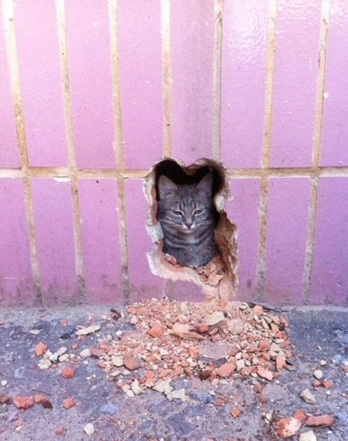 this cat in a wall