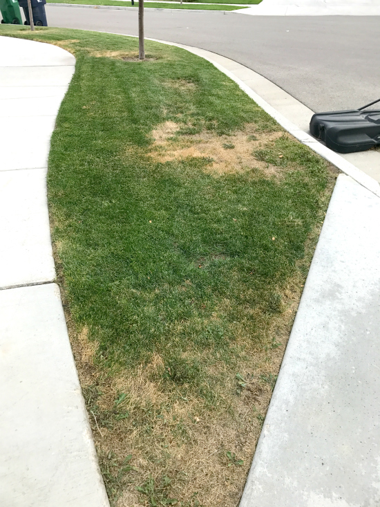 How To Green Up Your Grass Destroy Weeds Amp Kill Grubs