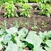 Gemüsebeet anlegen:  So klappt es!