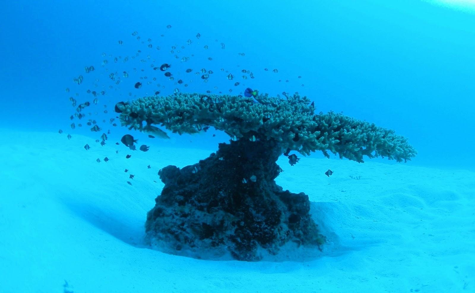 沖繩-沖繩潛水-沖繩浮潛-名護灣-推薦-潛點-Okinawa-scuba-diving-snorkeling