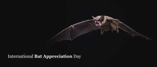 International Bat Appreciation Day Wishes Images