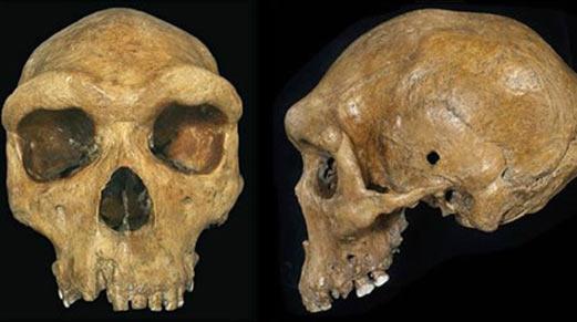 Una réplica del cráneo con un posible agujero de bala encontrado en Hill / Kabwe, del Museo en Livingstone, Zambia.