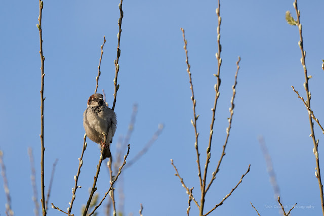 Sparrow watching. 400mm. 1/2000th sec. ISO 800. f/5.6
