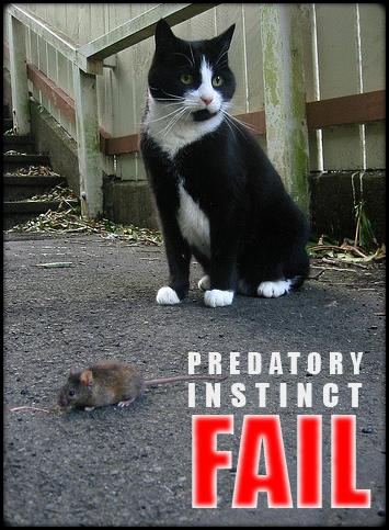 Cat and mouse • Predatory Instinct • EpicFAIL,haha