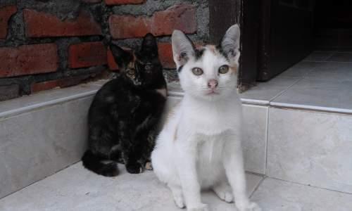 Cara Melatih Kucing Agar Tidak Pergi / Keluar Rumah dan Bisa Beradaptasi di Tempat Baru