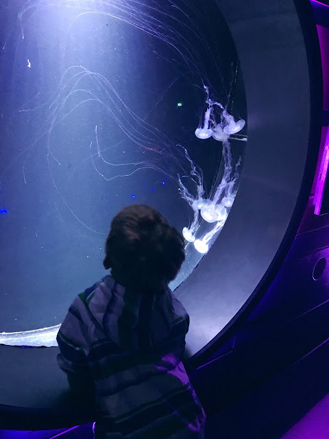 Little boy looking into a jelly fish tank
